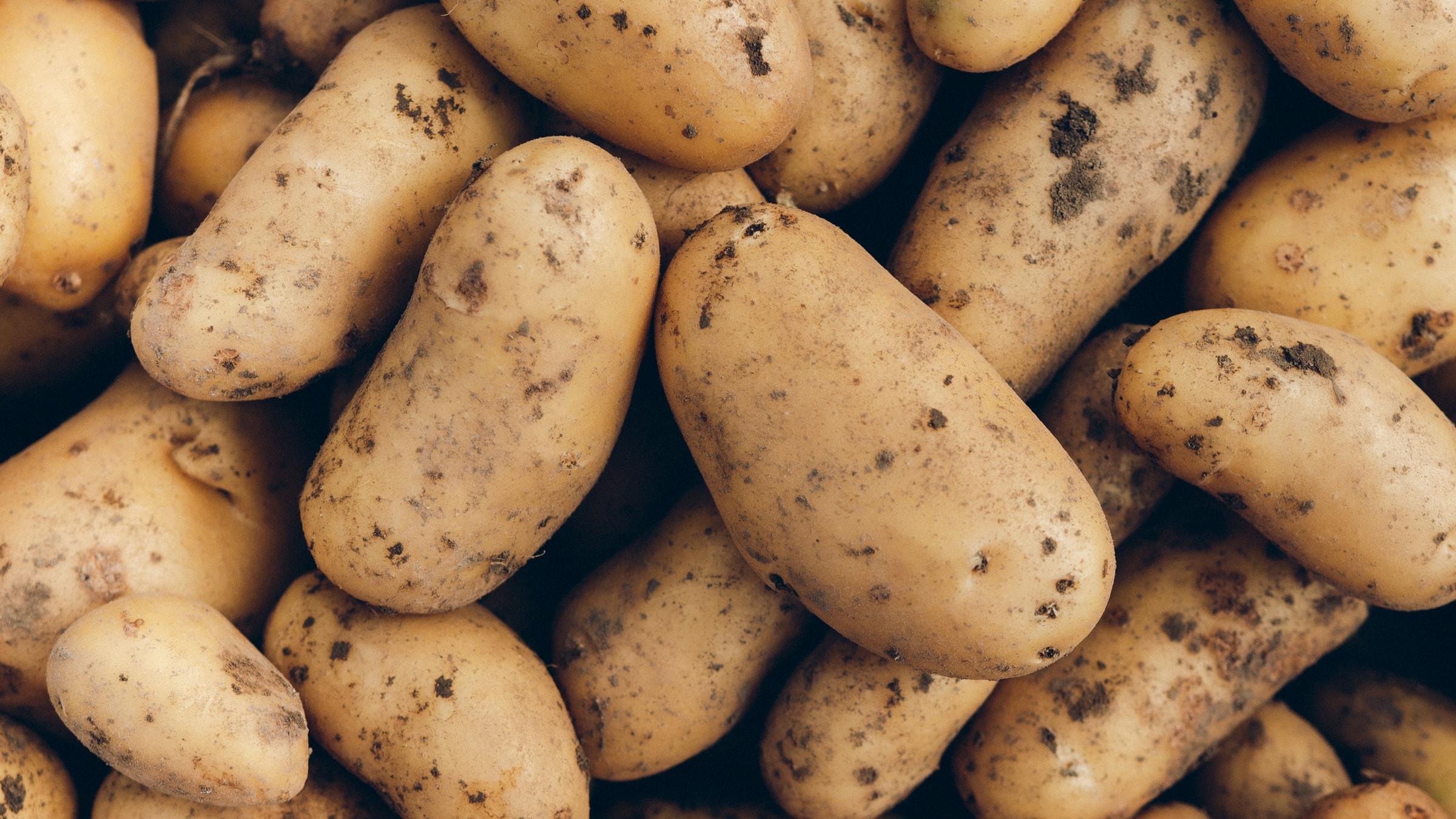 Kartoffeln richtig aufbewahren Das richtige Lagern & ihre Haltbarkeit