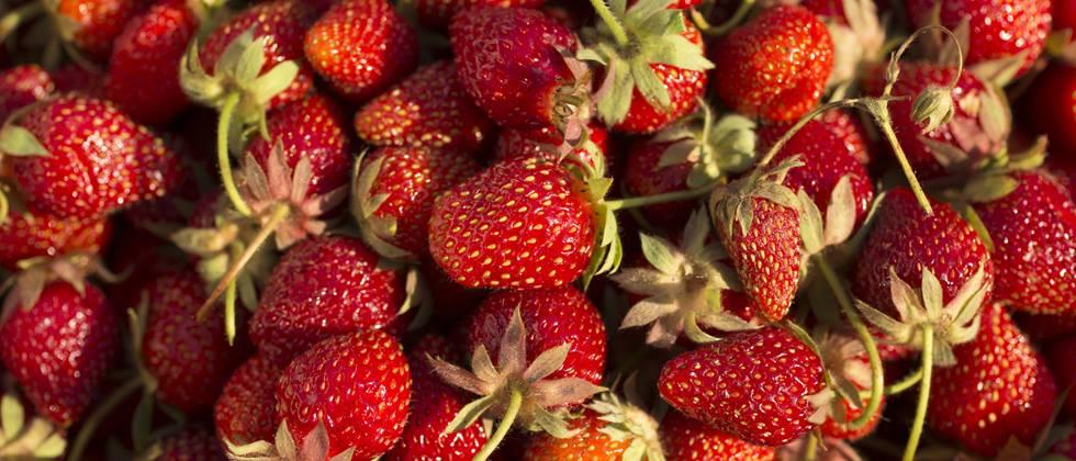 Wie Erdbeeren Aufbewahren