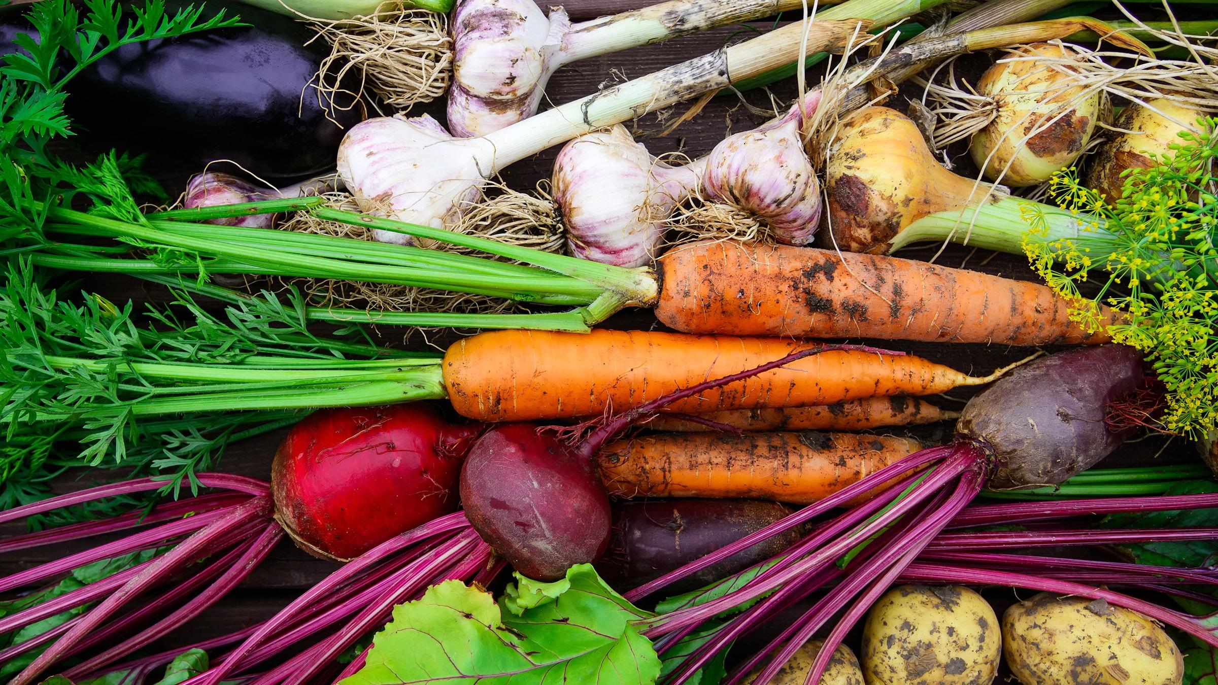 Lebensmittel richtig aufbewahren Die richtige Lagerung & Haltbarkeit